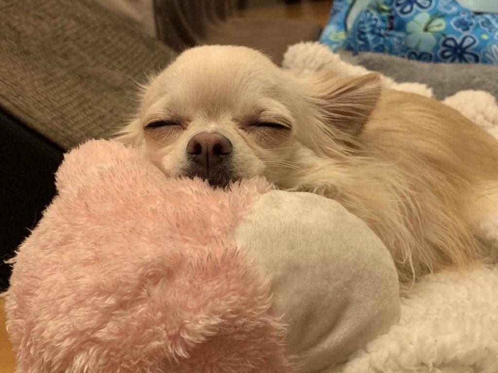 いつも寝ているレイ