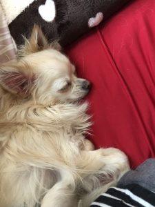 ソファの上で寝るレイ