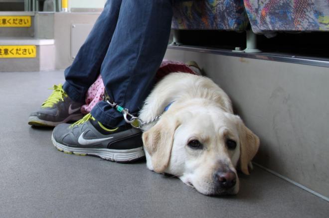 Vol.22 盲導犬サポートSHOP