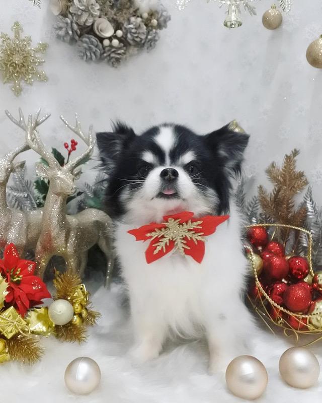 ラムクリスマスの写真