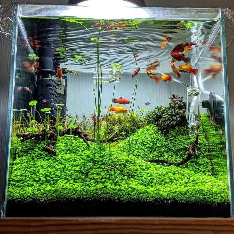 水草の緑の絨毯
